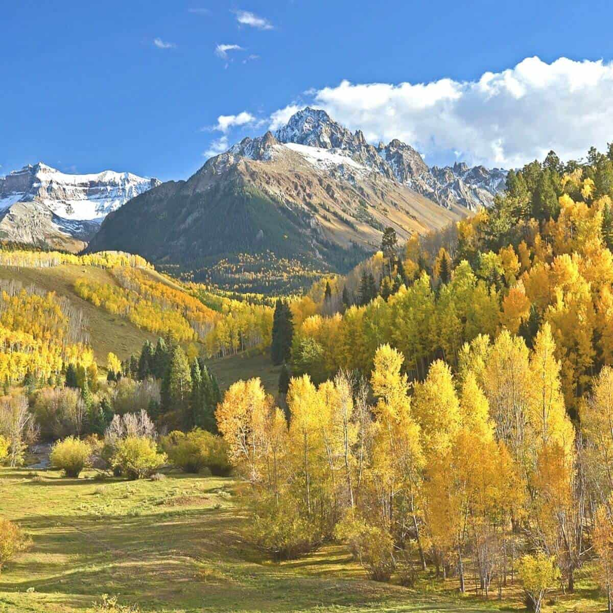 Mountains and trees in Colorado during the fall.