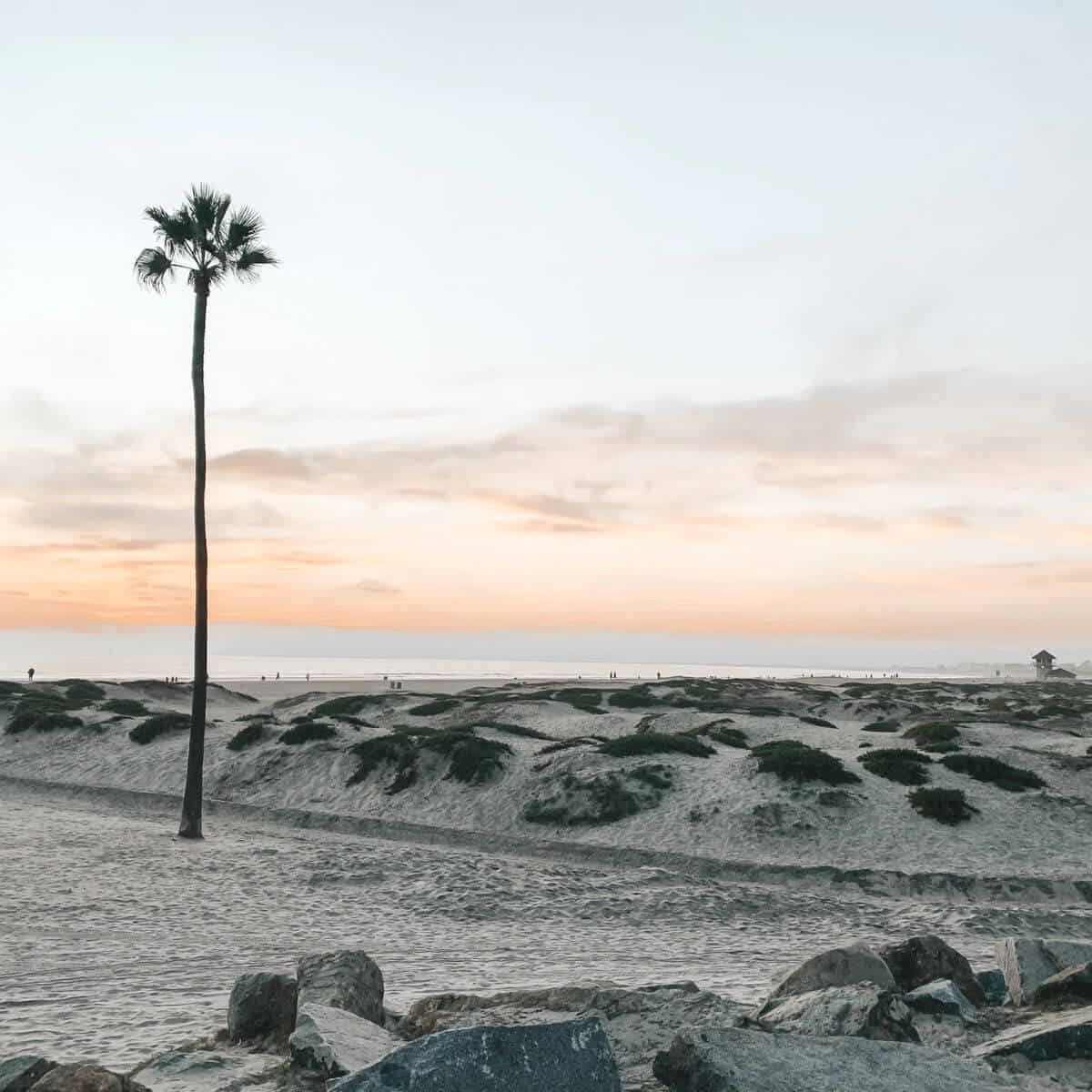 Palm tree on a beach shore during a sunset.