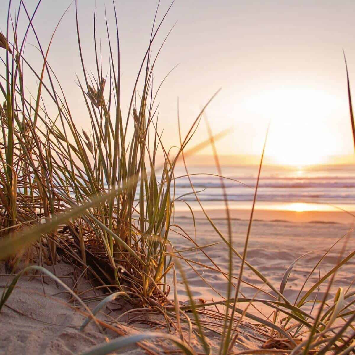 Tall grass and a sunrise at Surfside Beach in South Carolina.
