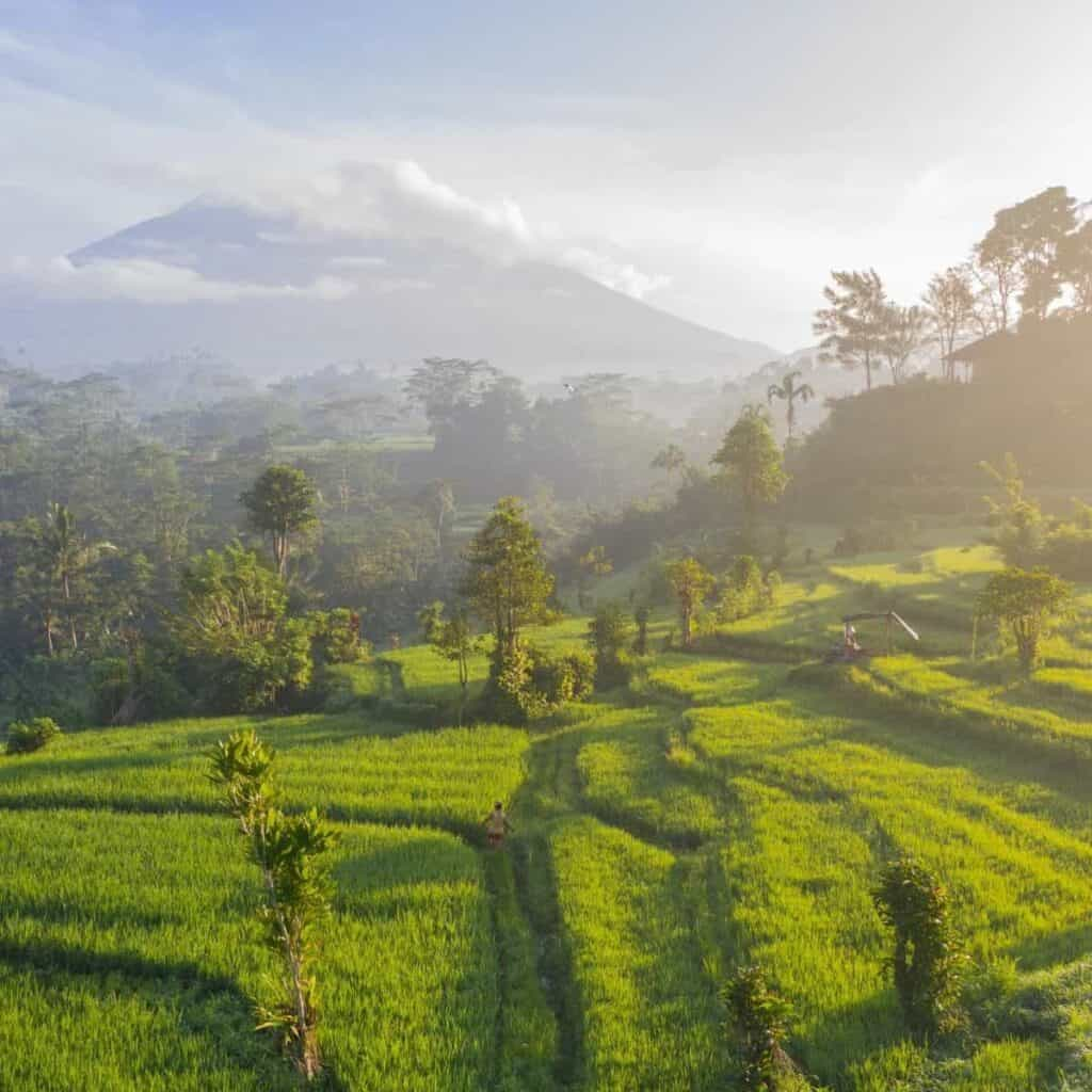 Grass fields and mountains in Bali.