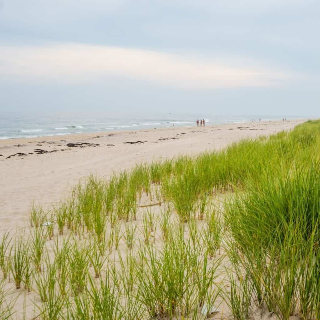 Beach with grass in The Hamptons.